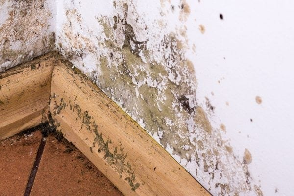 Concerned About Wet & Dry Rot