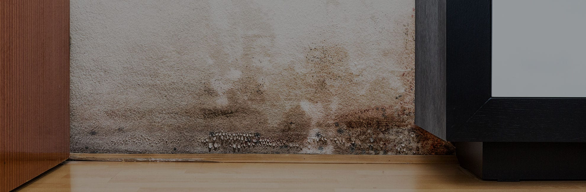 What Is Dry And Wet Rot?