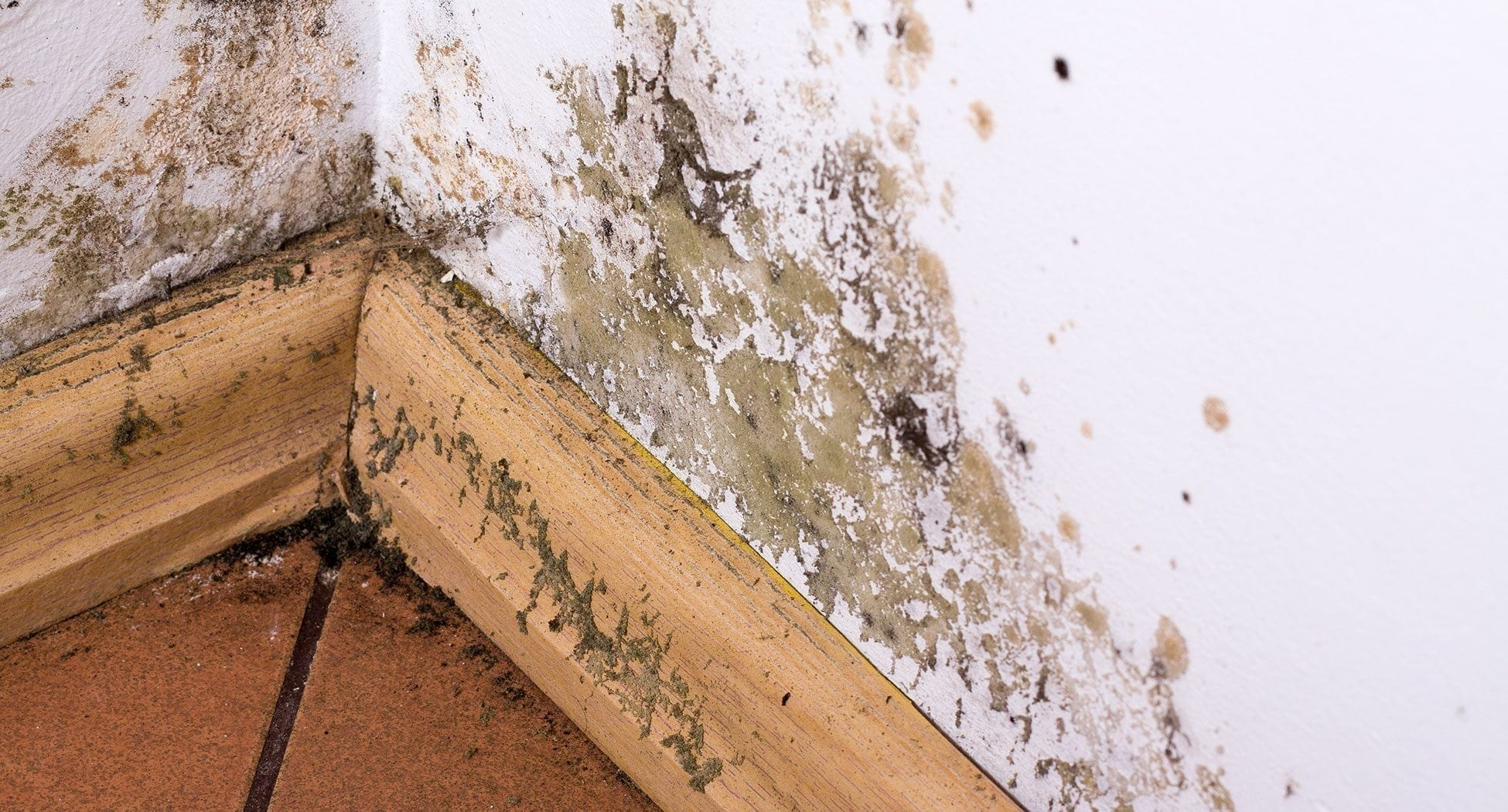 How To Protect Your Property From Damp