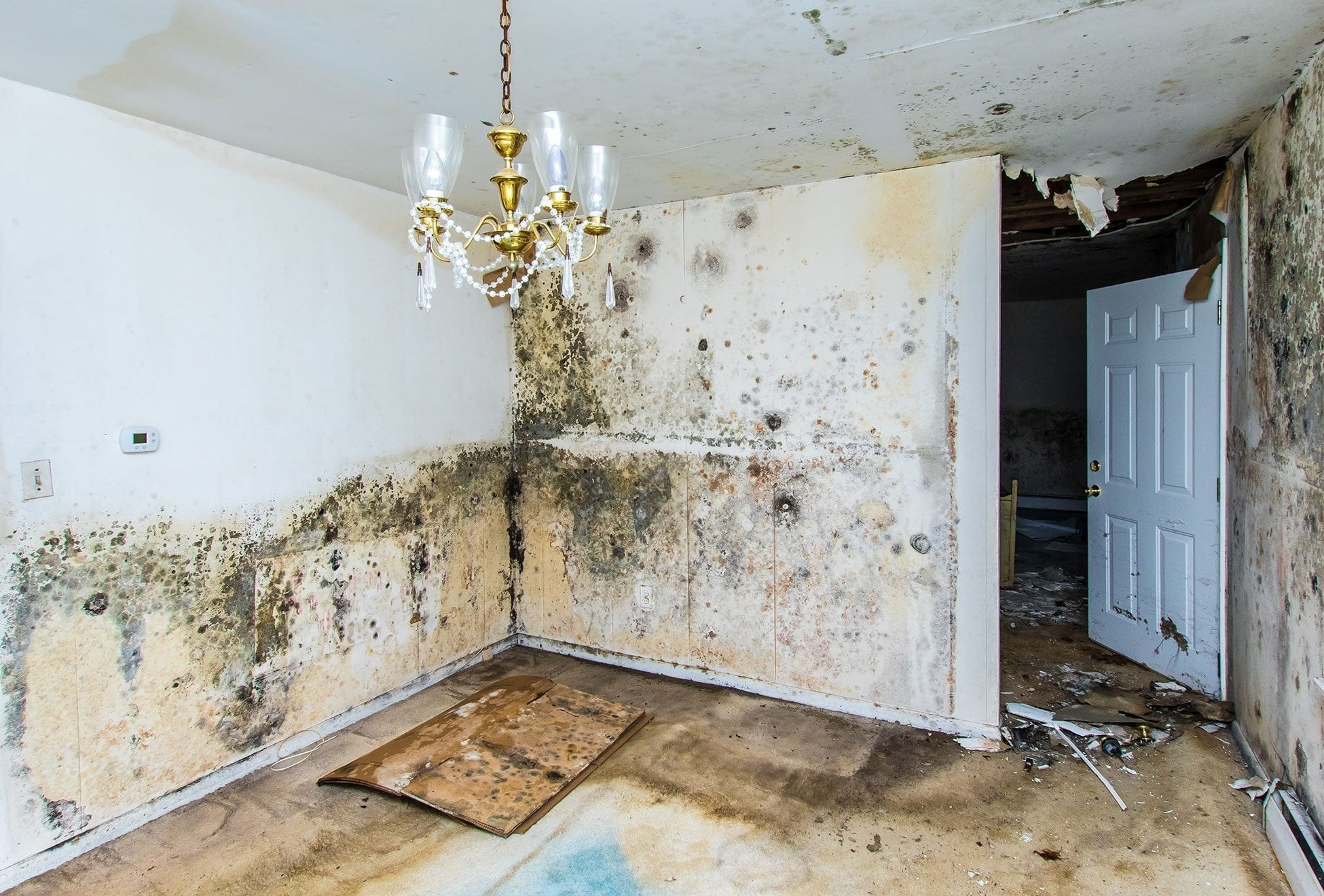 What To Do When You Find Rising Damp